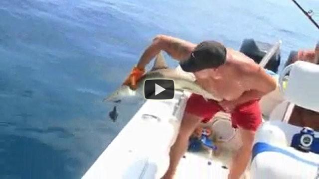 La vendetta di uno squalo