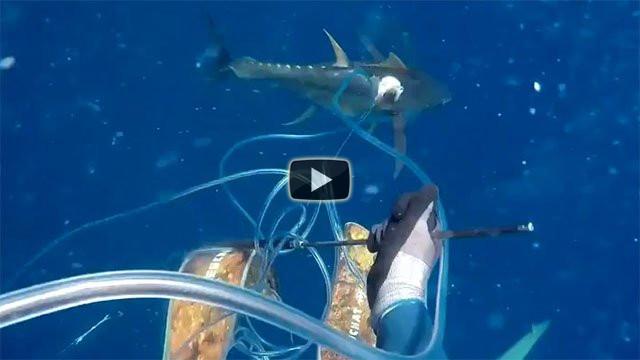Squalo attacca un pescatore subacqueo, il video incredibile