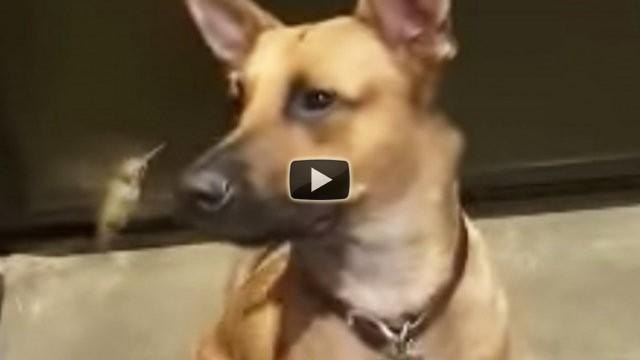 Un cane salva la vita ad un colibrì, ecco il rapporto che hanno adesso