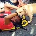 Ecco come questo cane conforta un uomo coinvolto in un incidente