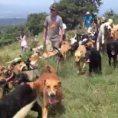 Un canile unico nel suo genere: 900 cani liberi sulla collina