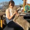 Un piccolo asino si avvicina ad una ragazza, lei resta senza parole