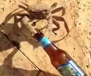 Granchio ruba la birra