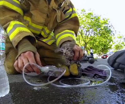 Vigile del fuoco salva un gattino