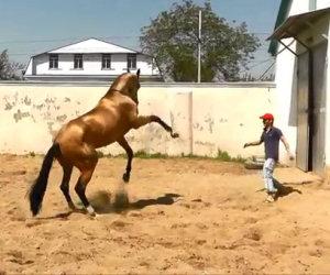 Lo spettacolo dell'addestramento di uno dei cavalli più belli al mondo