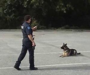L'agente punta solamente il dito, guardate cosa fa questo cane