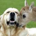 La compilation degli animali più affettuosi mai visti in video