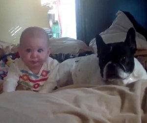 Animali che amano i bambini