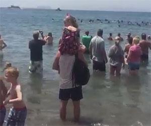 Un branco di balene spiaggiate viene salvato dai bagnanti