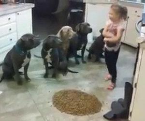 Cosa ci fa una bimba di 4 anni con 6 pit bull? E questi sarebbero aggressivi?