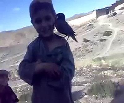 Bimbo insegna ad uccello a piangere