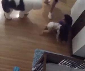 Bimbo di 4 anni salva la sorellina neonata che cade dal tavolo