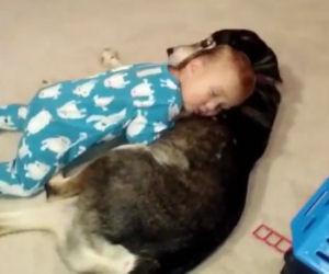 Il bimbo sta morendo di sonno, il suo cane gli fa da cuscino