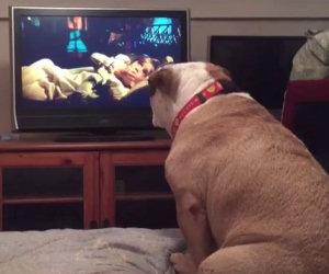 Il bulldog guarda un film horror e si spaventa come un umano