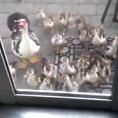 Qualcuno bussa alla porta: ecco chi trova quando va ad aprire