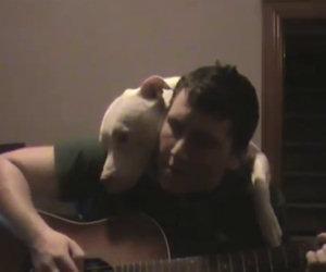 Cane ama la musica del padrone