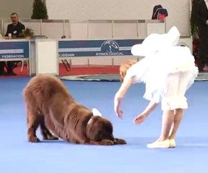 Inizia a ballare ma il suo cane gigantesco sarà il vero protagonista!