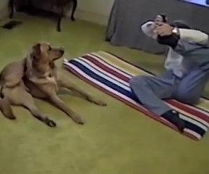 Prova una difficile posizione di yoga, anche il cane la esegue