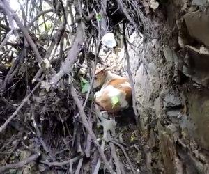 Un cane è stato gettato in un cespuglio, ecco come viene salvato