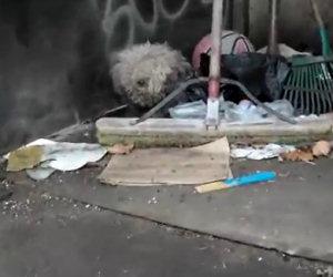 Cane cieco vive nella spazzatura, ciò che fanno è miracoloso