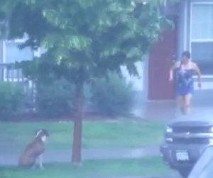 Cane dimenticato sotto il temporale