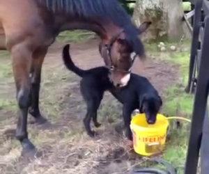 Il cane fa amicizia con un cavallo, i due diventano inseparabili