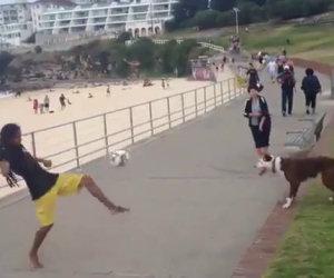 Questo cane gioca a calcio ed è più bravo di alcuni calciatori!
