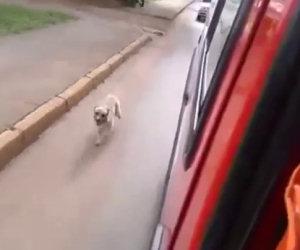 Cane insegue il padrone sull'ambulanza