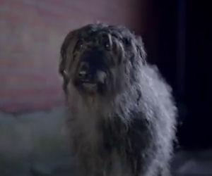 Un cane maltrattato scappa di casa, ecco come cambia la sua vita