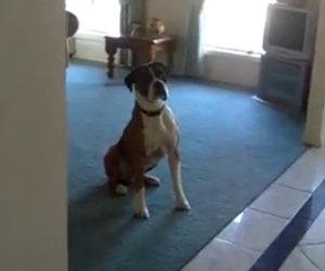 Il padrone gli propone una passeggiata, la reazione del cane è epica
