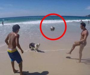 Il cane gioca in spiaggia e palleggia insieme ai suoi amici