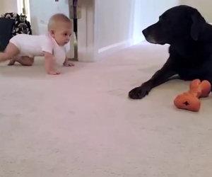 Cane premia una bimba che gattona