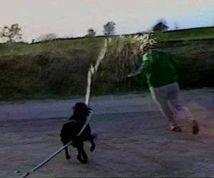 Il cane ruba un tubo dell'acqua e bagna il padrone inseguendolo