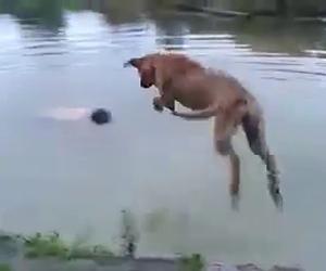 Questo cane salva il proprio padrone che sta per annegare