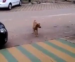 Non appena inizia la musica ecco cosa fa questo cane