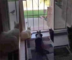 Il cane fa un agguato e terrorizza i suoi tre amici gatti