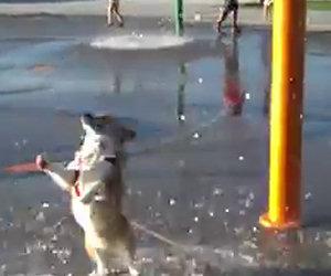 Portano il cane al parco acquatico, la sua reazione è divertentissima