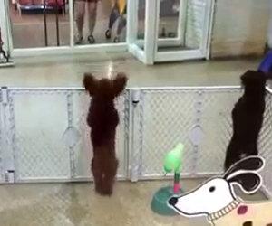 Cane felice appena vede la padrona