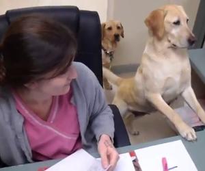 Porta i suoi cani al lavoro, loro la aiutano in modo divertente