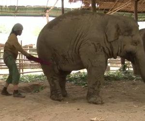 Inizia a cantare vicino un elefante e succede qualcosa di incredibile