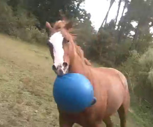 Nessuno credeva che il suo cavallo facesse questo, così lo ha filmato