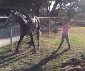 Le bambine iniziano a ballare, ecco la reazione del cavallo!
