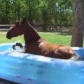 Il cavallo scopre la piscina per bambini, ecco la sua reazione