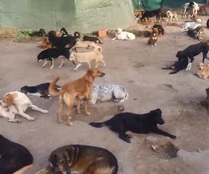 Centinaia di cani abbandonati ritrovano l'amore dell'uomo