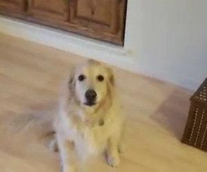 Chiede al suo cane di pulire casa, ciò che subito fa lui non ha prezzo
