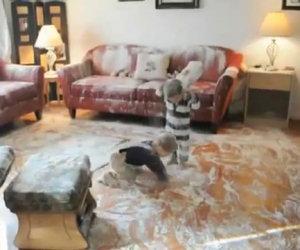 Due bambini distruggono i sacchi di farina e combinano un disastro
