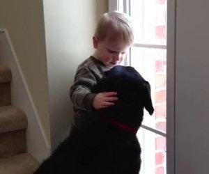 Al cane manca la sua famiglia, il bambino lo conforta in questo modo
