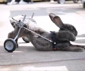 Non ha perso le speranze e ha fatto correre di nuovo il suo coniglio