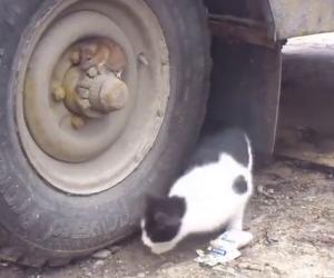 Il gatto lo cerca disperato, ecco come questo criceto si nasconde