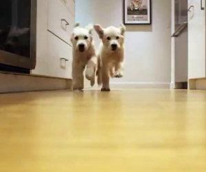 Prepara la pappa ai suoi due cuccioli e realizza un video insuperabile